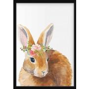 POSTER - Akvarell kanin