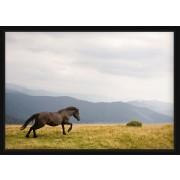 POSTER - Galopperande islandshäst